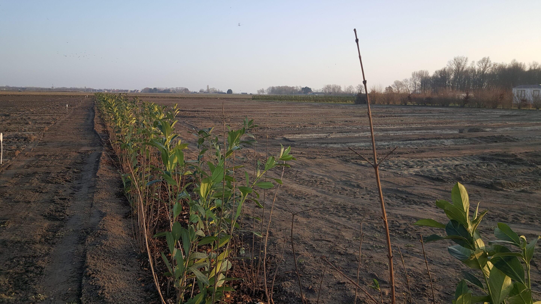 aanleg-groen-nieuw-veld