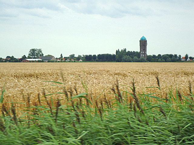 De watertoren van Zuidzijde tussen de tarwevelden